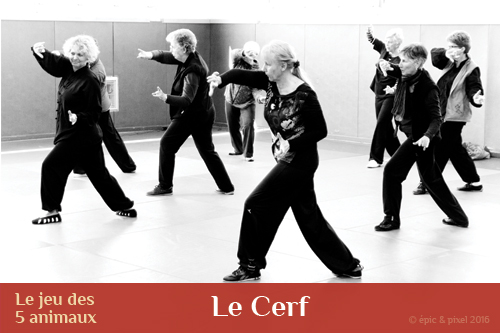 Qi gong des 5 animaux : le cerf